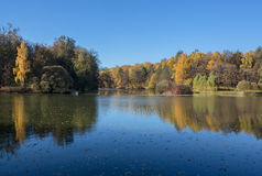 Autumn pond in the park  Royalty Free Stock Images
