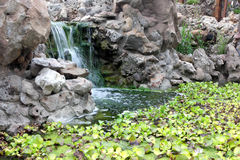 Autumn pond. Plants and man-made waterfall in the pond Royalty Free Stock Photo