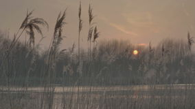 Autumn Pond Plume Reeds Twilight Afterglow Sunset stock video footage