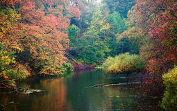 Autumn pond in the rain Royalty Free Stock Image