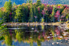 Autumn Pond Reflection Stockfotografie