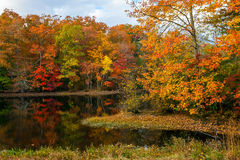 Autumn Pond Reflections Stock Photo