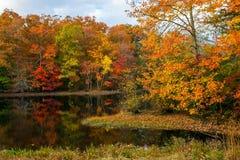 Autumn Pond Reflections Stock Foto