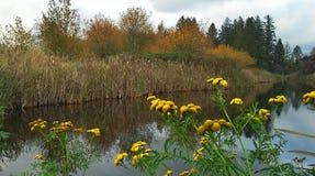 Autumn Pond Stock Photography