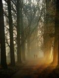 Autumn in poplar avenue. With fog and rays of the sun., Photo taken in Poland, wielkopolska, Czarnkow Stock Photography