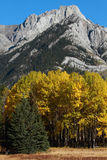 Autumn Poplar Trees and Mountains Stock Photo