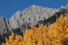 Autumn Poplar Trees and Mountains Royalty Free Stock Photos