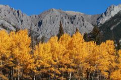 Autumn Poplar Trees and Mountains Stock Images