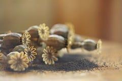 Autumn poppy heads with poppy seeds stock image
