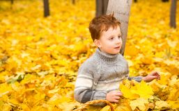 Autumn portrait of beautiful child. Happy little boy with leaves in the park in fall. royalty free stock images