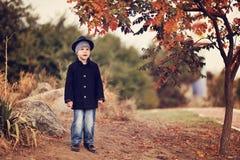 Autumn portrait of the boy Stock Images