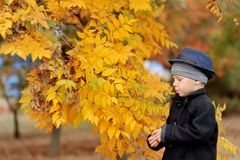 Autumn portrait of the boy Stock Photography