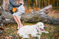 Autumn portrait of white retriever groun-up lying in yellow leaves. background loving couple Stock Photos