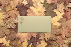 Autumn postcard Royalty Free Stock Image
