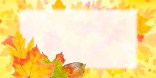 Autumn Postcard for Design Stock Photos