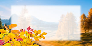 Autumn Postcard for Design Royalty Free Stock Image