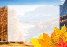Autumn Postcard for Design Stock Photography