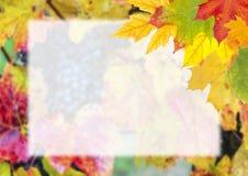 Autumn Postcard for Design Royalty Free Stock Photos