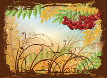 Autumn postcard with red rowan Stock Image