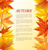 Autumn Poster with Foliage on Right and Left Side Stock Images