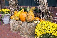 Autumn Potourri Stock Images