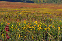 Autumn prairie Royalty Free Stock Photos