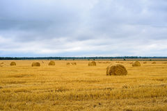 Autumn prairie. Field grasses growth royalty free stock images