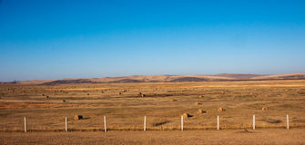 Autumn Prairie. The hulun buir grassland in autumn in China Royalty Free Stock Image