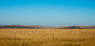 Autumn Prairie. The hulun buir grassland in autumn in China Royalty Free Stock Images