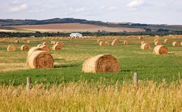 Autumn prairie and straw piles Stock Photography
