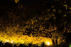 Autumn pressure. Branches and autumn leaves illuminated by lampposts creating a dark zone Royalty Free Stock Photography
