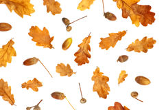 autumn print with acorn and yellow oak leaves Stock Images