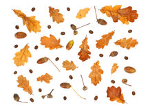 autumn print with coffee beans, acorn and yellow oak leaves Royalty Free Stock Photo