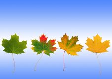 Autumn Progression Royalty Free Stock Photos