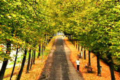 Autumn promenade. A small road in a park lined with green trees. Fit for wellness, regeneration, soul-searching, lost soul, health, green park, forest, etc Stock Photos