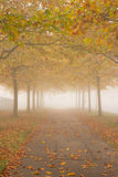 Autumn promenade with golden trees Royalty Free Stock Images