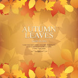 Autumn promotional banner Stock Photos