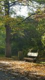 Autumn in the `Pszczelnik` A wooden bench on the main promenade alley royalty free stock image