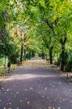 Autumn In Public Park stock photos