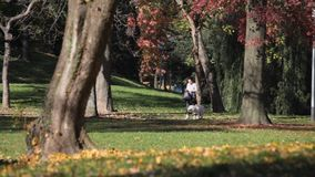 Autumn in the public park stock footage