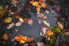 Autumn puddle after the rain Royalty Free Stock Photos