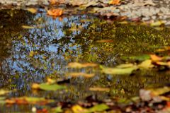 Autumn puddle with reflection of surrounding foliage. Around the bustle and the puddle reflects the nature stock image