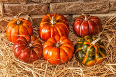 Autumn Pumkins Royalty Free Stock Image