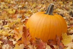 Autumn Pumpkin Stock Images