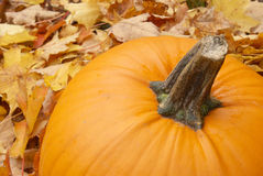 Autumn Pumpkin Royalty Free Stock Images