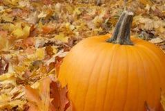 Free Autumn Pumpkin Stock Image - 11361021