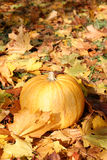 Autumn pumpkin. Ripe pumpkin surrounded with colorful autumn leaves Royalty Free Stock Photos