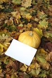 Autumn pumpkin. With a paper clean sheet Stock Image