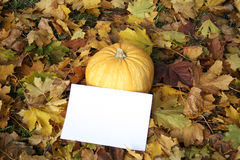 Autumn pumpkin. With a paper clean sheet Royalty Free Stock Photography