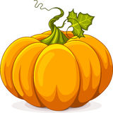Autumn Pumpkin Royalty Free Stock Image